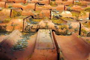 traitement de toiture, démoussage de toiture